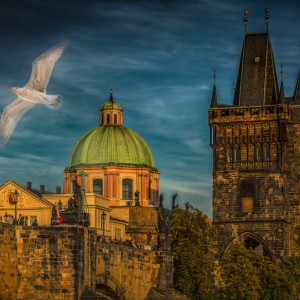 Bird-in-Prague